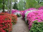 Go to Isabella Plantation