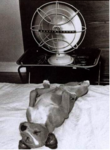 dog resting by a fan
