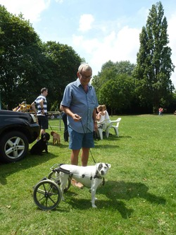 Dog Show. Disabled dog Patch with owner Glyn Roberts