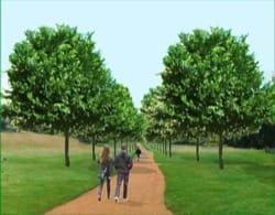 Image - richmond-park-elm-tree