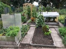 Image - lbrut-allotment